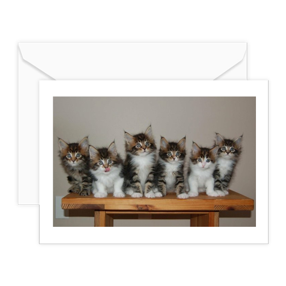 cats blank w-envelope