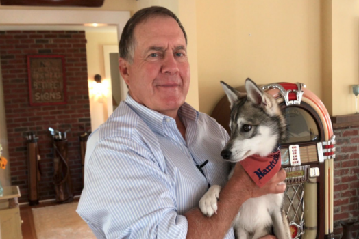 Bill Belichick's dog