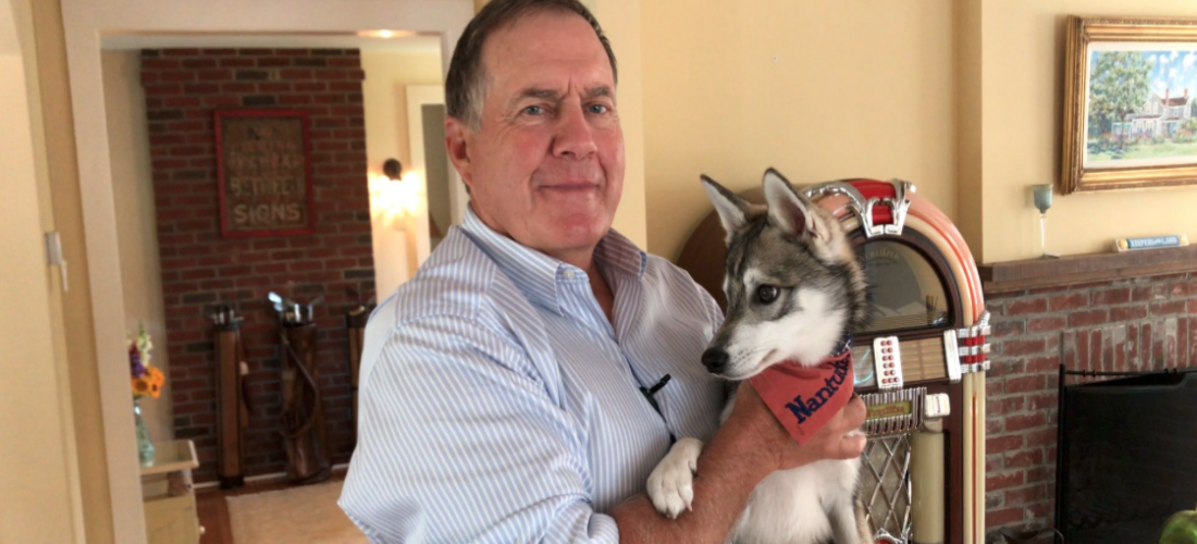 Bill Belichick's dog