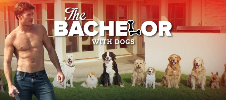 "Will you accept this bone?: ""The Bachelor"" with dogs!"